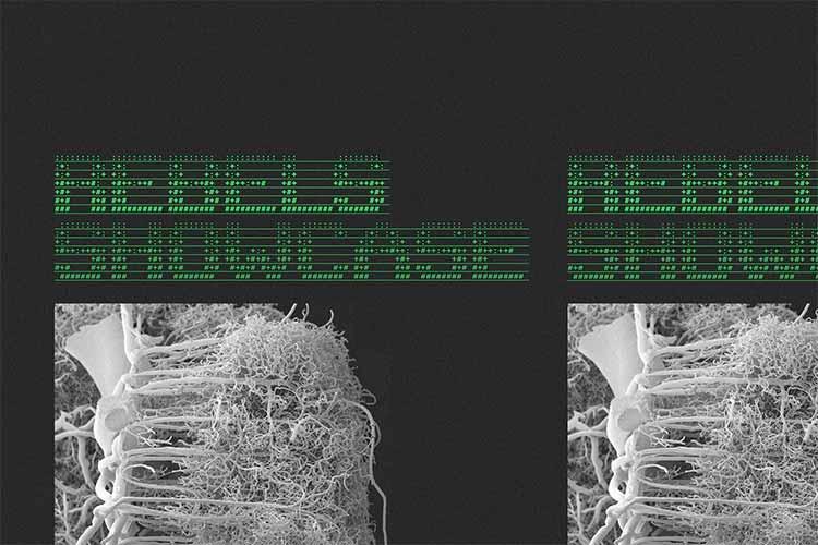 REBELS Show-case - NX1 Live - Nöel KRS + Izar5 + Editer #JjUPstairs